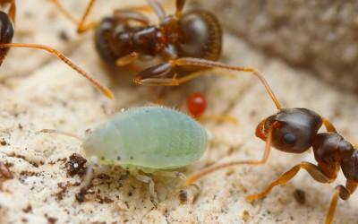 Eliminare le formiche: alcuni rimedi naturali